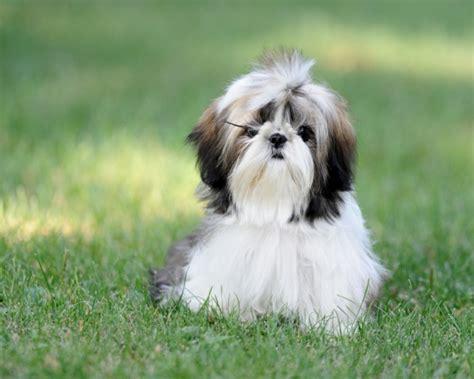 Langhaarige Hunder En Mit Wirklich Langem Fell