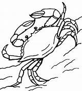 Crab Coloring Printable sketch template