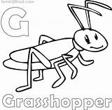 Grasshopper Coloring Pages Printable Getcolorings sketch template