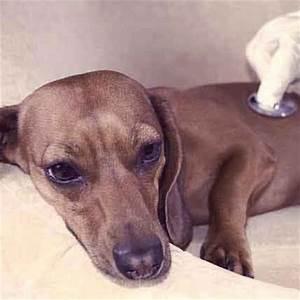 Dog Breed Weight Chart - Fat Dog, Skinny Dog   PetCareRx.com