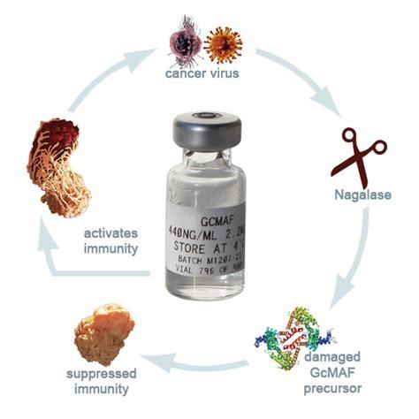 GcMAF Treatment Immune Cells 21