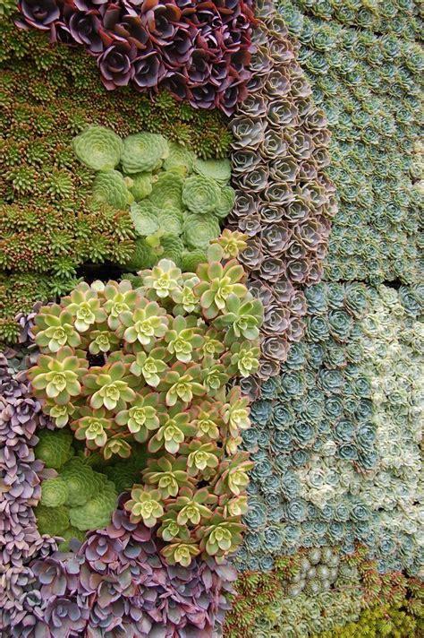 Succulent Wall  Succulents Pinterest