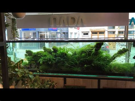 Aquascaping Shop by Beautiful Aquascaping Shop In Belgium