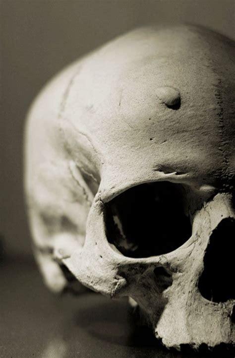pin  lauren panepinto  skulls bones
