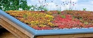 Extensive Dachbegrünung Pflanzen : dachbegr nung der trend f r naturnahes wohnen gartenxxl ratgeber ~ Frokenaadalensverden.com Haus und Dekorationen