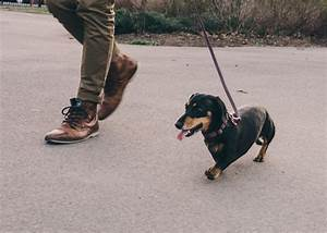 A photo series featuring an oversized dachshund and her for A photo series featuring an oversized dachshund and her owner adventuring around brooklyn