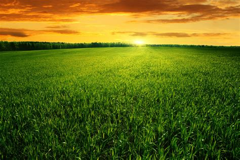 Field Of Green Grass And Bright Sunset. By Macinivnw On