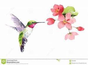 Hummingbird With Flower Clip Art (66+)