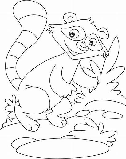 Raccoon Coloring Pages Racoon Rocky Printable Template