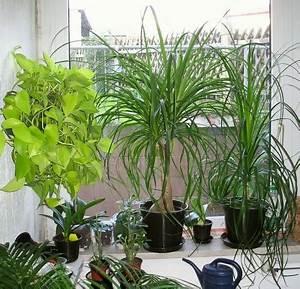 Feng Shui Pflanzen Reichtum : bei zimmerpflanzen aufs bio siegel achten ~ Markanthonyermac.com Haus und Dekorationen