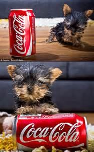 World's Smallest Dog 2013