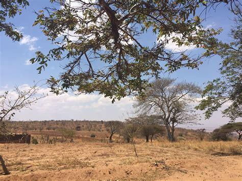 filedrought   kongwa district dodoma region