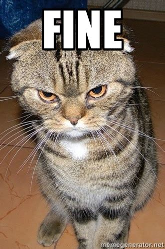 laughable angry cat meme sayingimagescom