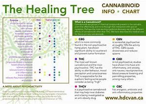 How Many Cannabinoids In Cannabis   Top 10 Cannabinoids