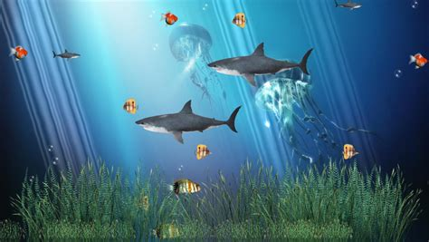 Moving Anime Wallpaper For Windows 7 - coral reef aquarium animated wallpaper