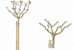 Wann Schneidet Man Rosen : 1794 besten flowers garden bilder auf pinterest balkon blumengarten und garten terrasse ~ Eleganceandgraceweddings.com Haus und Dekorationen