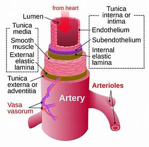 What Are Arteries  Veins And Capillaries   U00bb Science Abc