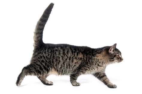 How To Read Cat Communication Signals?