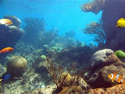 Sea Coral Under Reefs Fish Gifs Marine