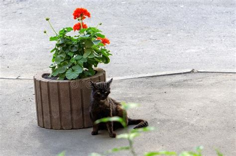 sick cat flower pot unhappy homeless sitting near bed animals plant disease plastic orange