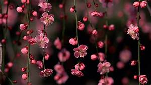 Was Sind Frühlingsblumen : bild von fr hlingsblumen ~ Whattoseeinmadrid.com Haus und Dekorationen