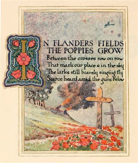 poppy poppies remembrance war field flanders meaning symbolize memorial