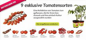 Tomaten Richtig Schneiden : die gute vorgehensweise um die tomaten zu schneiden ~ Lizthompson.info Haus und Dekorationen