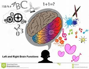 Left And Right Brain Function Stock Vector - Illustration ...