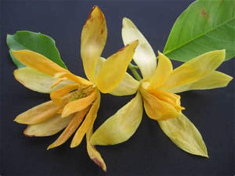 bunga tabur produksi indonesia anakagronomydotcom