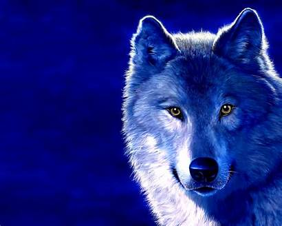 Desktop Wallpapers Wolf Ice Wolves Backgrounds Computer