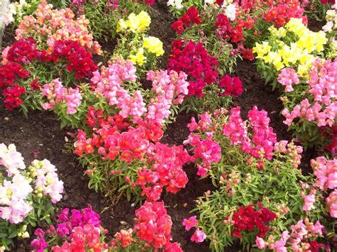 Jardin Florido  Fotos De Maratonesflora Y Fauna De Cantabria