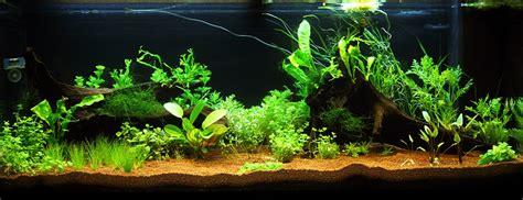 anguille aquarium eau douce aquarium eau douce 240l