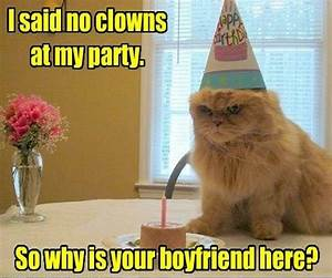 Image Gallery rude cat
