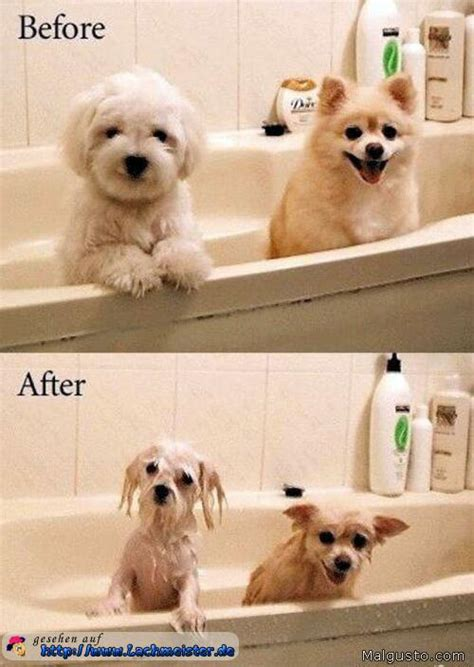 tiere unter der dusche