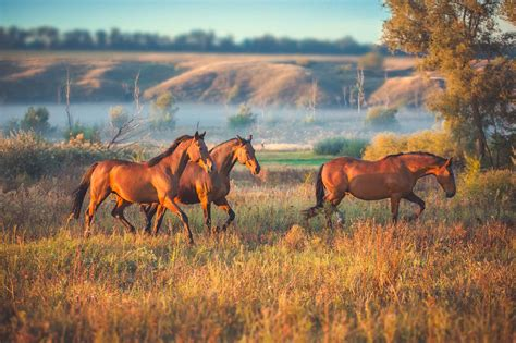 wild horses things adopt agdaily federal government blm croatia bg bondarenko viktoriia