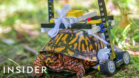 Injured Turtle Gets Lego Wheelchair