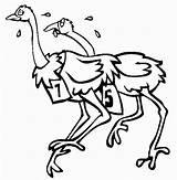 Ostrich Coloring Animals Printable Preschool Animal Marathon Kindergarten sketch template