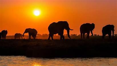 Elephant African Breathtaking Vacations Nature Botswana Amazing