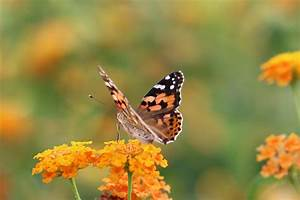 Fliegen Fernhalten Balkon : insekten und spinnen jugendtierschutz ~ Whattoseeinmadrid.com Haus und Dekorationen