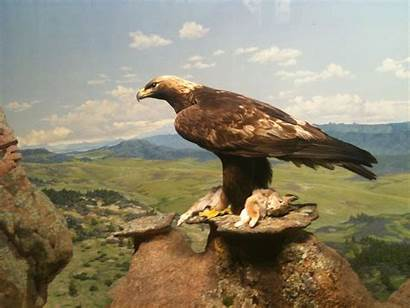 Eagles Eagle Golden Energy Goldeneagle Take Renewable