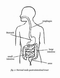 easy picture of a digestive system new digestive system With drawing a diagram
