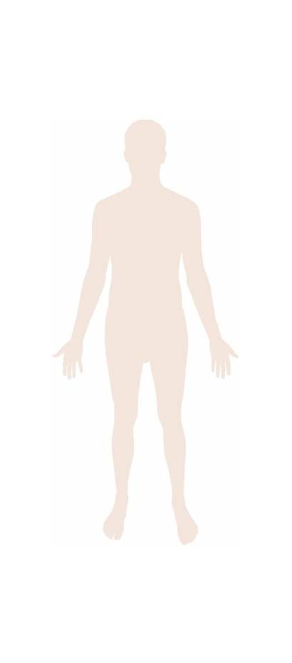 Human Silhouette Svg Clipart Transparent Commons Wikimedia