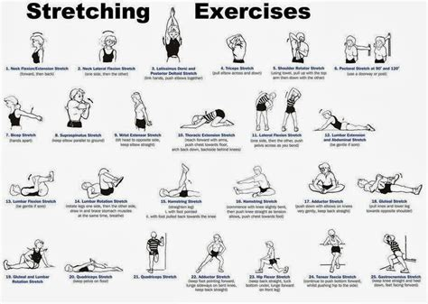 exercises      home  lose weight