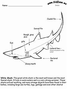 Shark Activity Sheet
