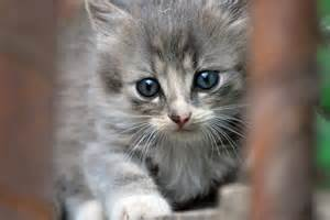 baby cats for baby cat pixdaus
