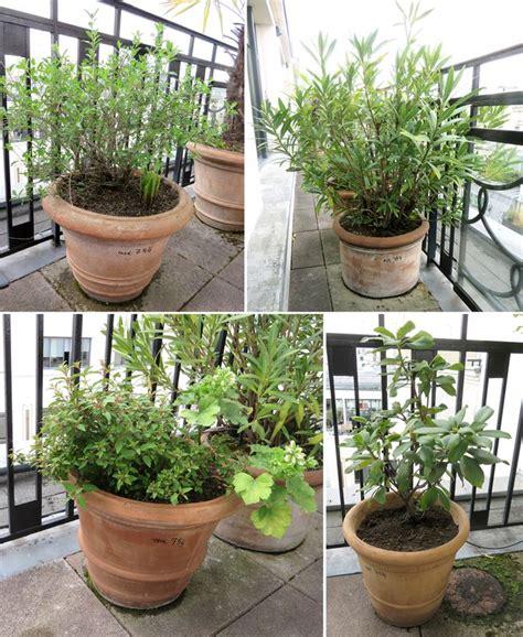quelle plante pour pot haut 28 images quelle plante pour pot haut 20170821161203 arcizo