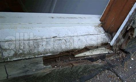 Replace Rotted Window Sill by How To Replace A Rotted Window Sill For The Home