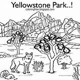 Coloring Yellowstone Printable Wolf Wildlife National Realistic Animal Animals Adults Drawing Hilltop Buffalo Sketch America North Np Template Bison sketch template