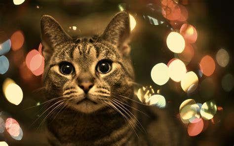 animals cat bokeh wallpapers hd desktop  mobile