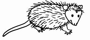 How To Draw Opossums Drawing Tutorials U0026 Drawing U0026 How